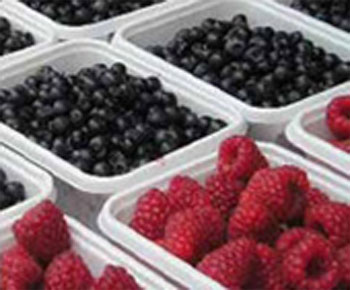 frutti sottobosco